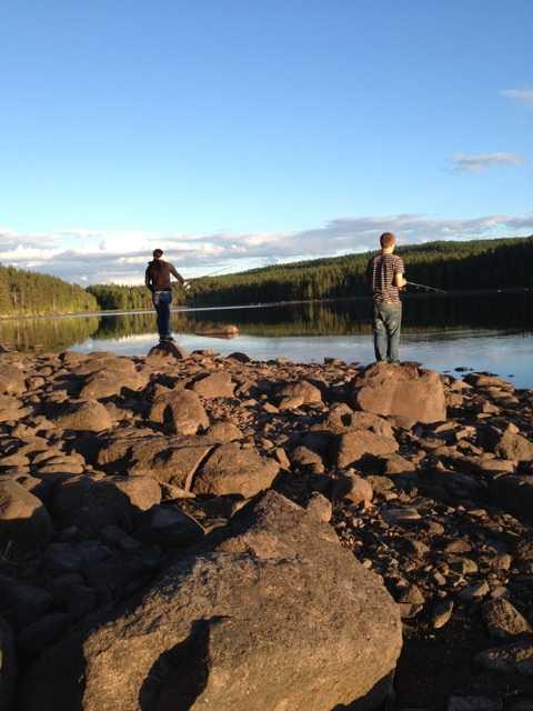 Träffade på en älg en sen kväll i juni Therese och Joakim på en fisketur en ljuvlig kväll i juni. Kattungen Kenny ute på en sommarpromenad för första gången.