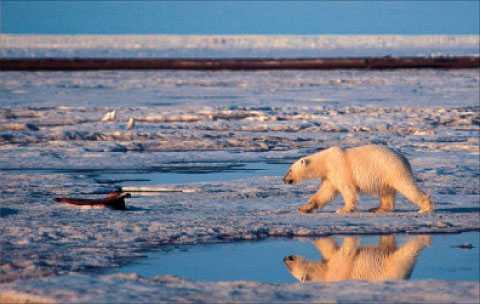en dödsspiral  Mycket talar för att Arktisisen befinner sig i en så kallad dödsspiral; avsmältningen går snabbare och snabbare. Det riskerar att driva på klimatförändringarna, och konsekvenserna kan bli oöverskådliga, skriver Jonna Sima.