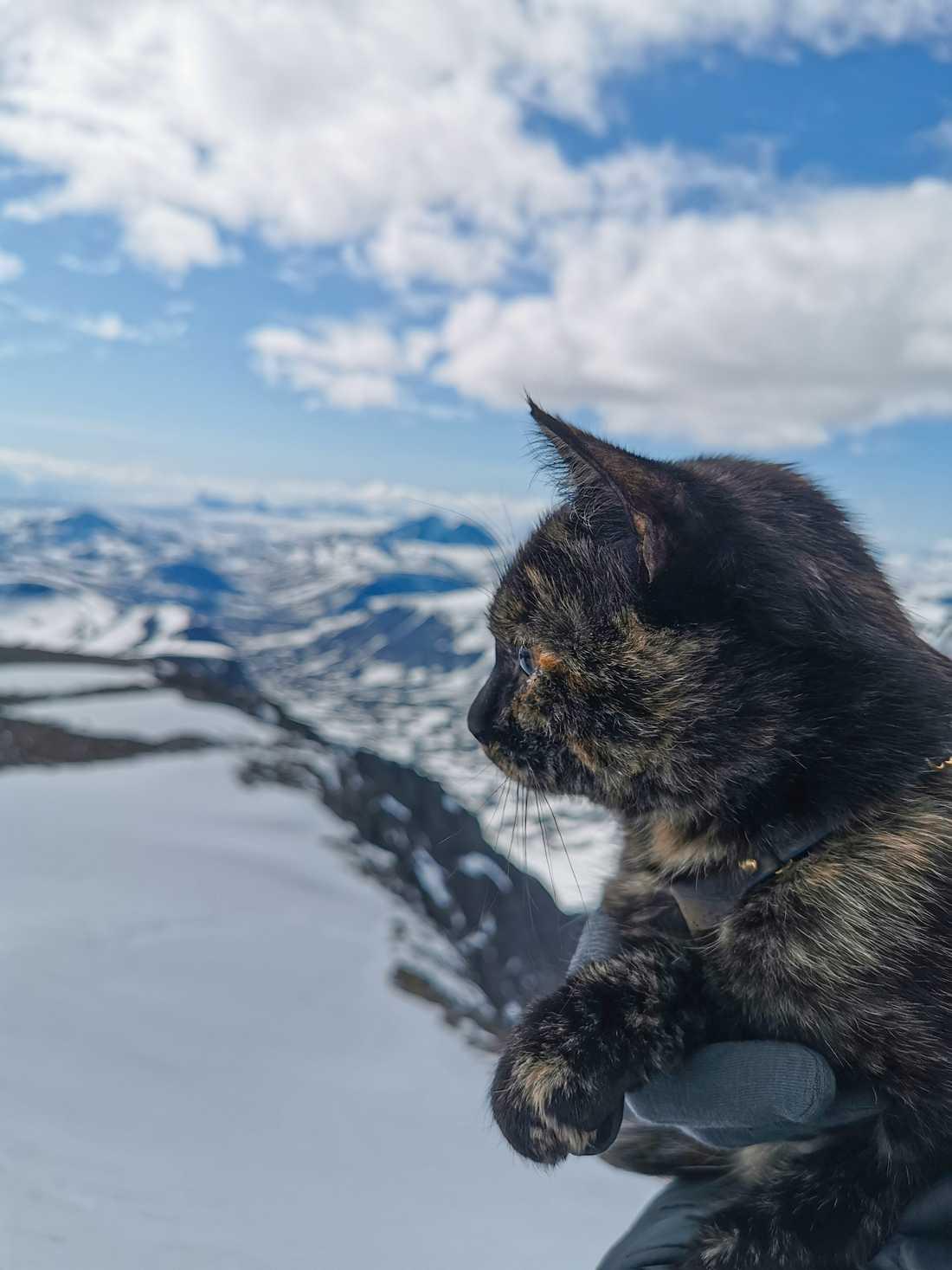 Kattis kollar in utsikten från Sveriges högsta berg.