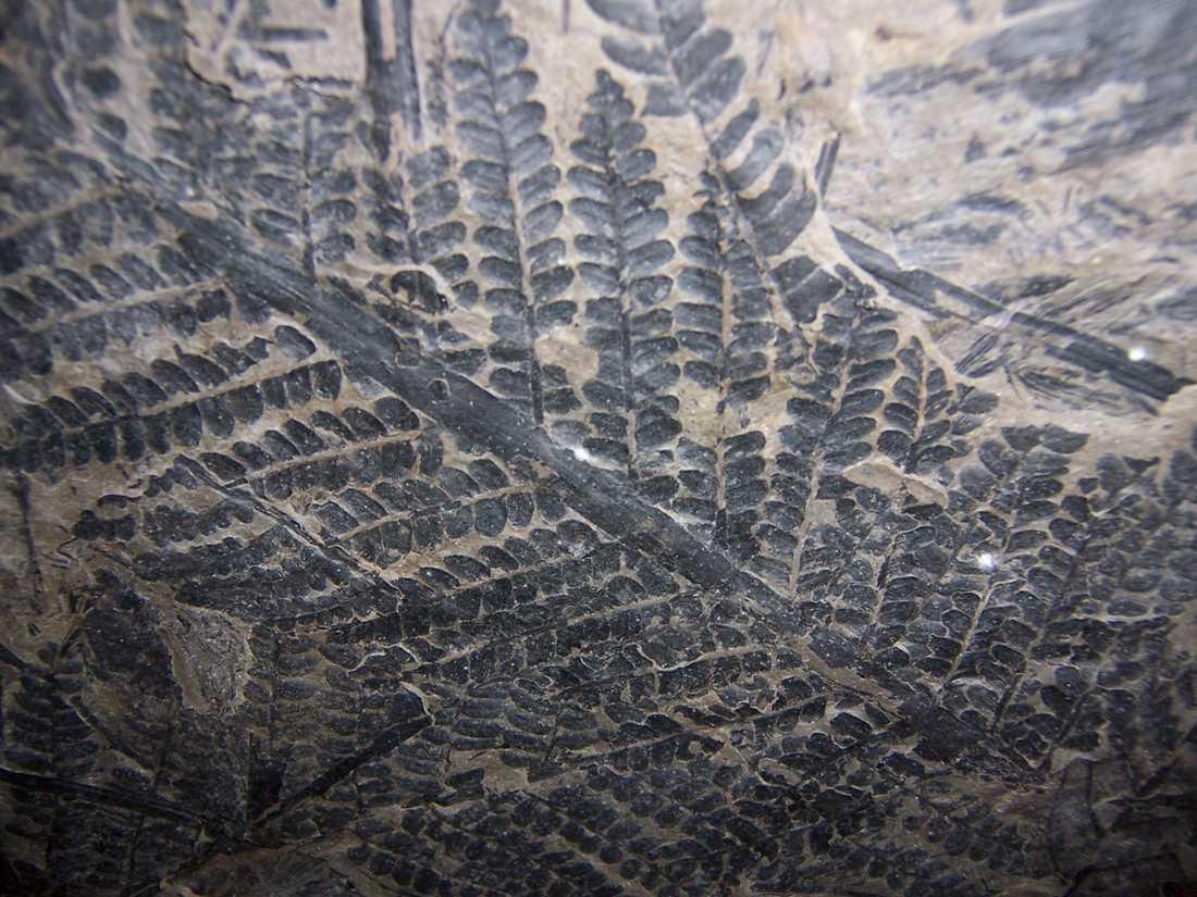 Forskare har funnit spår efter vad man tror är världens hittills äldsta kända skog. Arkivbild.