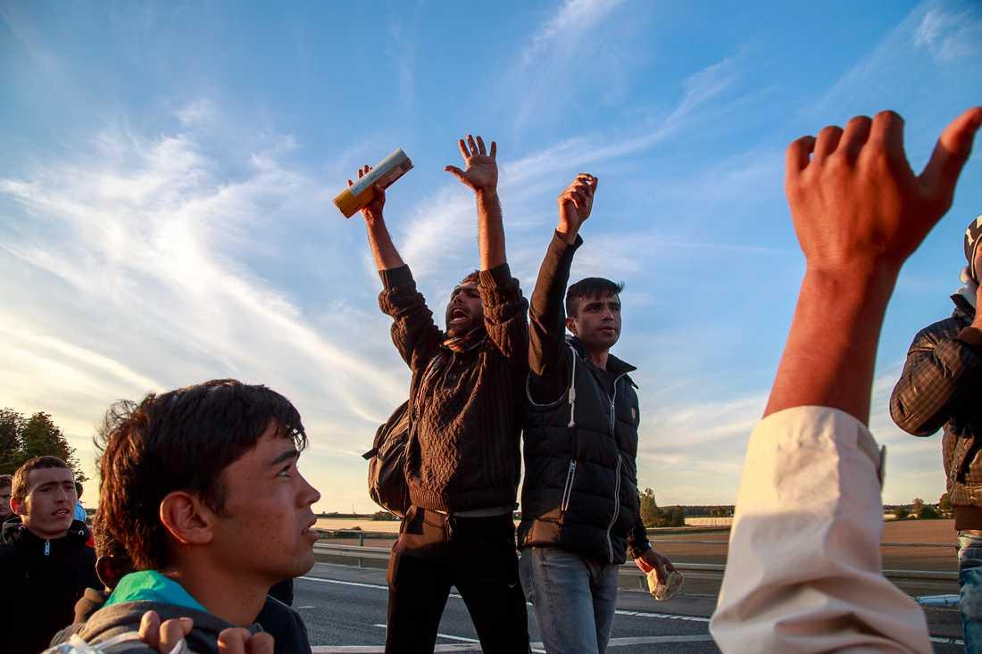 Flyktingar vandrar genom Danmark på väg till Sverige.