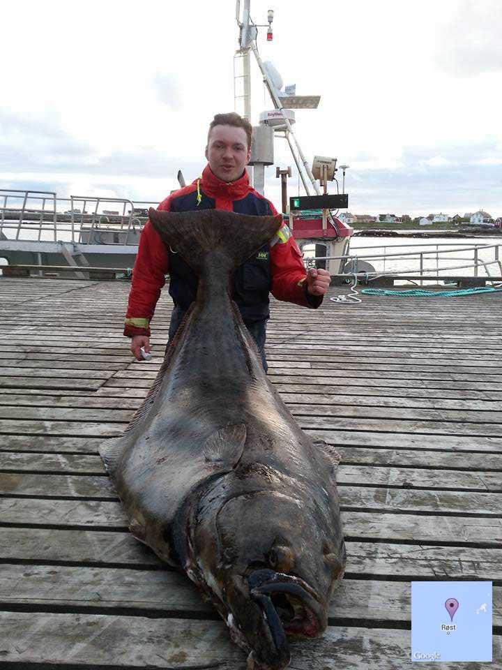 Tommie Johansson krokade en dunderhälleflundra den 16 juni i Rösthavet i norra Norge. Bjässen vägde hela 102 kilo.