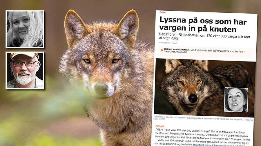 Det är rent horribelt att inte bara jägarnas organisationer utan också politiska partier i Sveriges riksdag kräver licensjakt på varg även 2021 på en redan starkt hotad vargstam. Replik från Marlen Fuglsang och Mikael Björn.