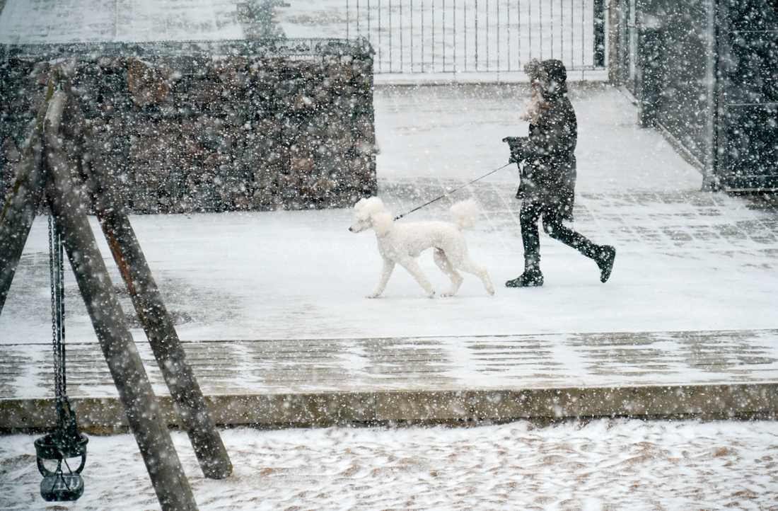 Väder: Blötsnö väntas i södra Sverige. Snöfall i Malmö 2018. Arkivbild.