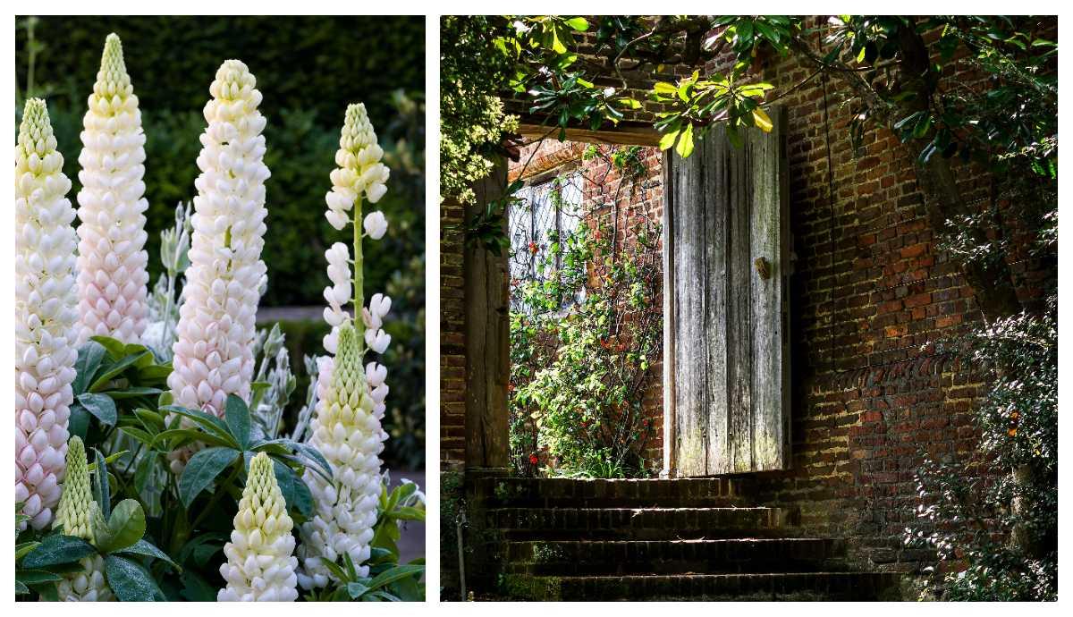 Sissinghursts är känd för sina vita blommor. Murar och trimmade häckar skapar stilen i slottsträdgården.