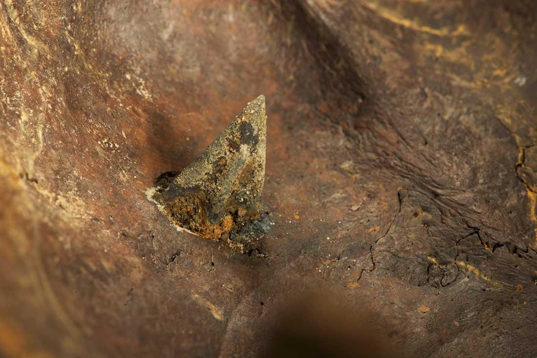 Samma skalle, fast från insidan, där det syns att pilen har trängt långt in i hjärnan. Med hjälp av metalldetektorer och drivna amatörarkeologer har forskarna hittat fler än 50 pilspetsar gjorda av brons längs med floden.