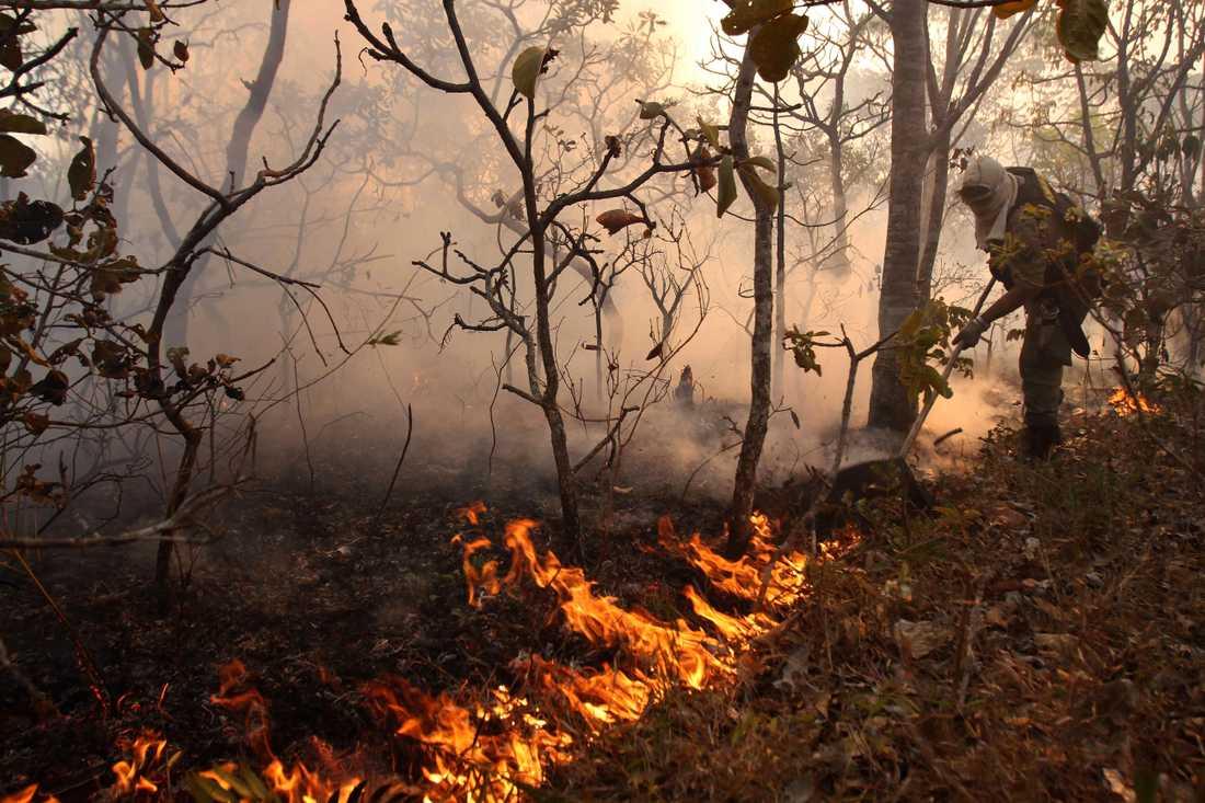 Skog bränns ner för att utvidga bland annat betesmarker.