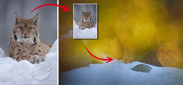 DIGITALT BILDTROLLERI Terje Hellesø laddade hem någon annans bild på ett lodjur från en sajt på internet, spegelvände den, och klippte och klistrade sedan in lodjuret i sin egen vintriga landskapsbild. Samma tillvägagångssätt återkommer i flera av hans fuskverk.