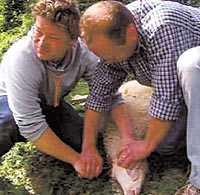 Jamies slakt Jamie Oliver sticker kniven i lammet – bonden tvingas gripa in och se till så att lammet dör.