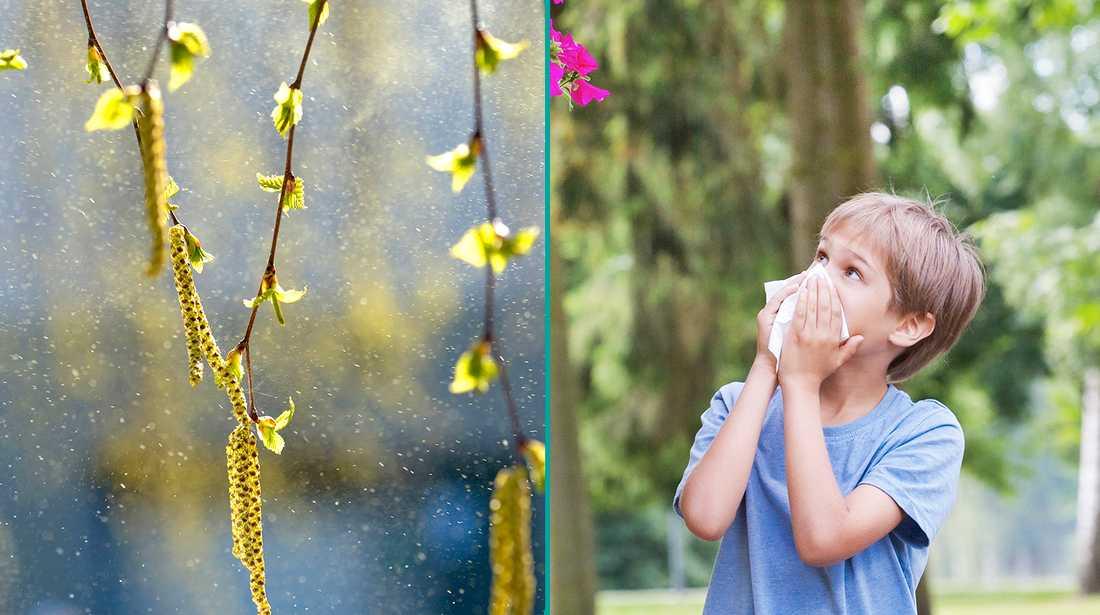 Så gör du om du misstänker att barn har pollenallergi.