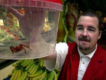 BÖRJES NYA HUSDJUR När Börje Östman hittade en spindel bland bananerna på Hemköp lät han sig inte skrämmas. Han fångade in spindeln och tog hem den, men familjen delar inte hans glädje över det nya husdjuret.