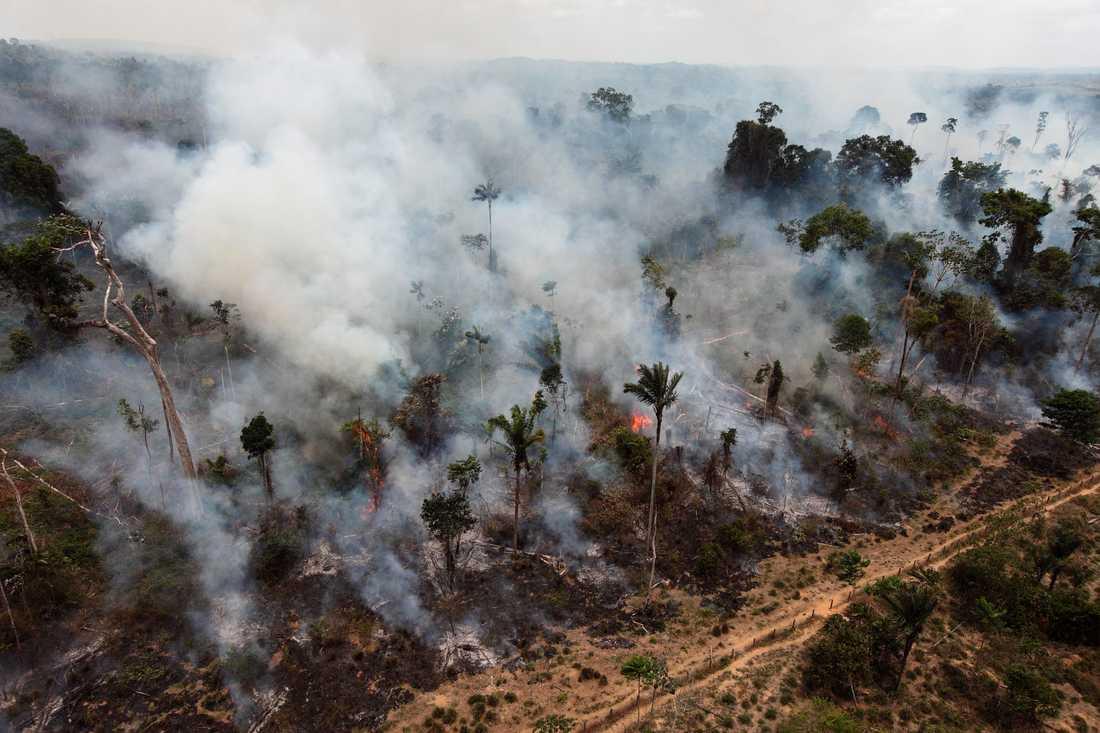Antalet skogsbränder i Amazonas har ökat rejält i år. Arkivbild från en annan brand i regnskogsområdet, tagen 2009.