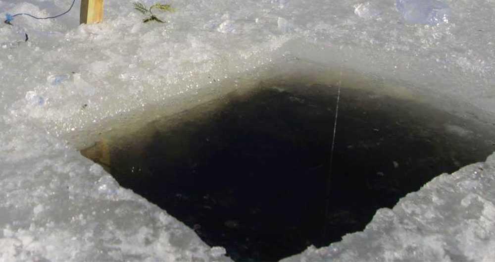 Hund drunknade efter att ha räddat valp ur isvak | Aftonbladet