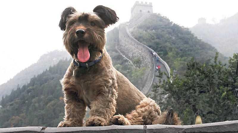 Oscar på Kinesiska muren.