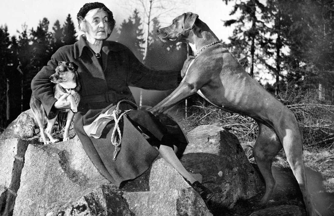 """Signe Björnberg skrev böcker under psedonymen """"Sigge Stark"""", men var också travtränare och drev en kennel. Här med en av Grand Danois-hundarna från kenneln. Bilden är troligen tagen i Mannickehöjden, där hon bodde de sista 13 åren av sitt liv."""