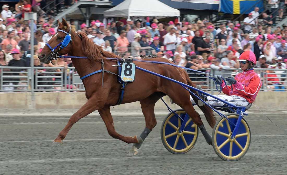 Björn Goop tillsammans med Dreammoko på Solvalla i fjol. Då startade den franske hästen i Fyraåringseliten, nu är Timoko-sonen klar för Elitloppet, som sin far vann för ett år sedan.