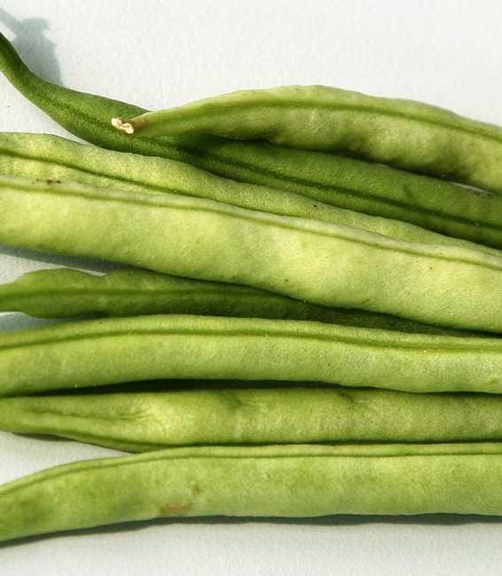 16 goda grönsaker som är lätta  att odla