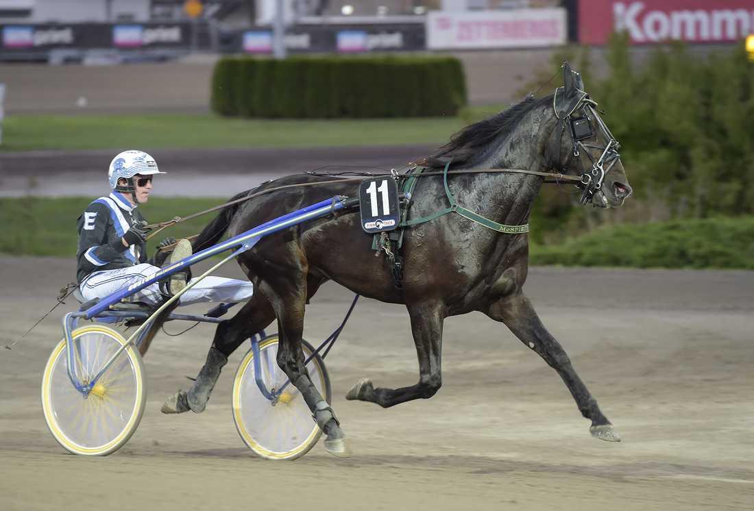 Mattias Zachrisson deläger McSpirit tillsammans med familjen och några vänner från Västerås. På söndag körs den Tomas Malmqvist-tränade hästen av Christoffer Eriksson.