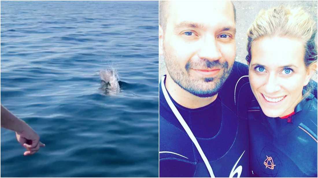 Tumlare eller delfin?