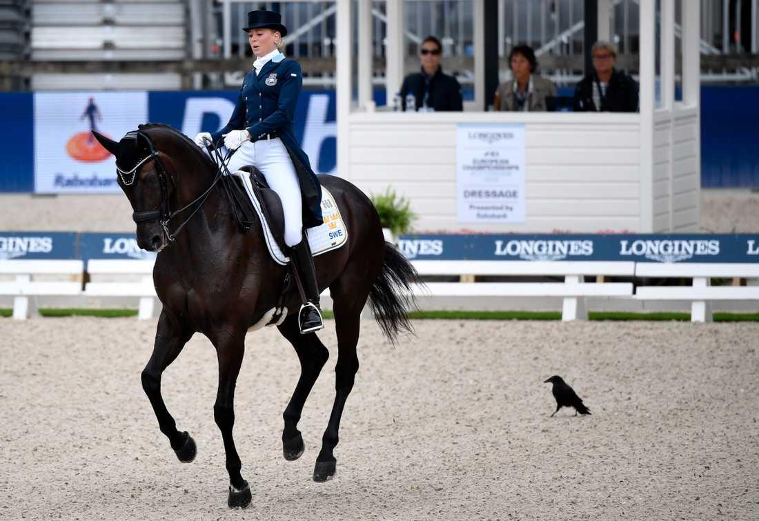 En nyfiken fågel gjorde Antonia Ramel och Brother de Jeu sällskap i EM-dressyren i Rotterdam.