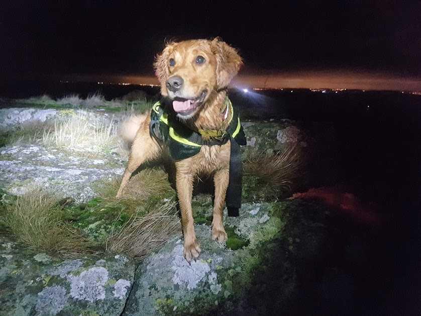 När det är mörkt ute kan Freya vara till stor hjälp i sökarbetet.