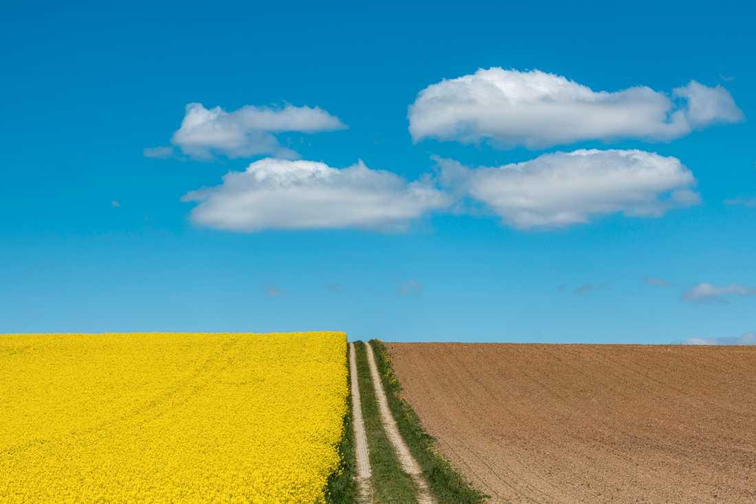 Användningen av kemiska växtskyddsmedel ska minska enligt förslaget om livsmedelsstrategi från EU. Arkivbild.