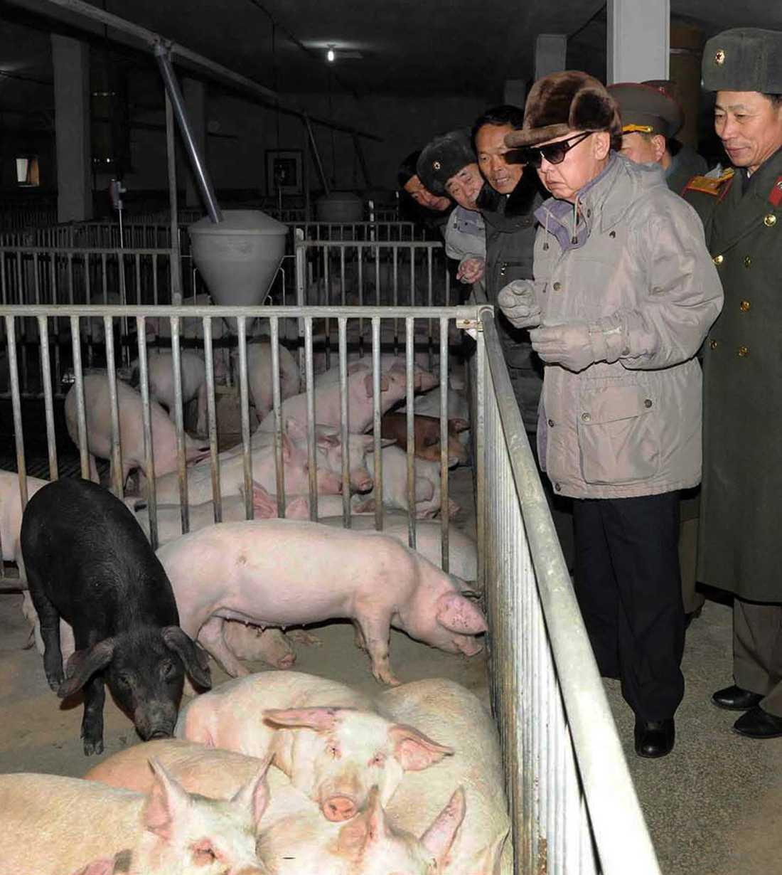 KIM TITTAR PÅ GRISAR Grisarna som Kim Jong Il hälsar på är välgödda, mätta, välskötta och kan se fram mot ett bekymmerslöst liv där man inte behöver tänka själv.