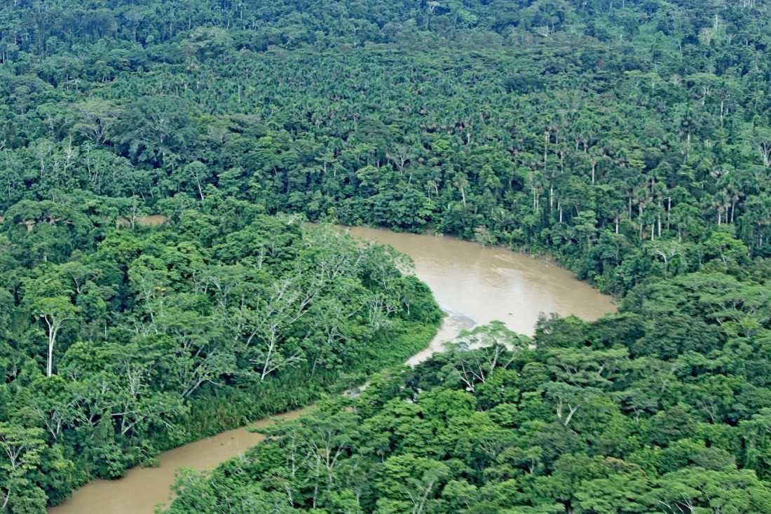 Regnskog i Yasuni National Park i Ecuador