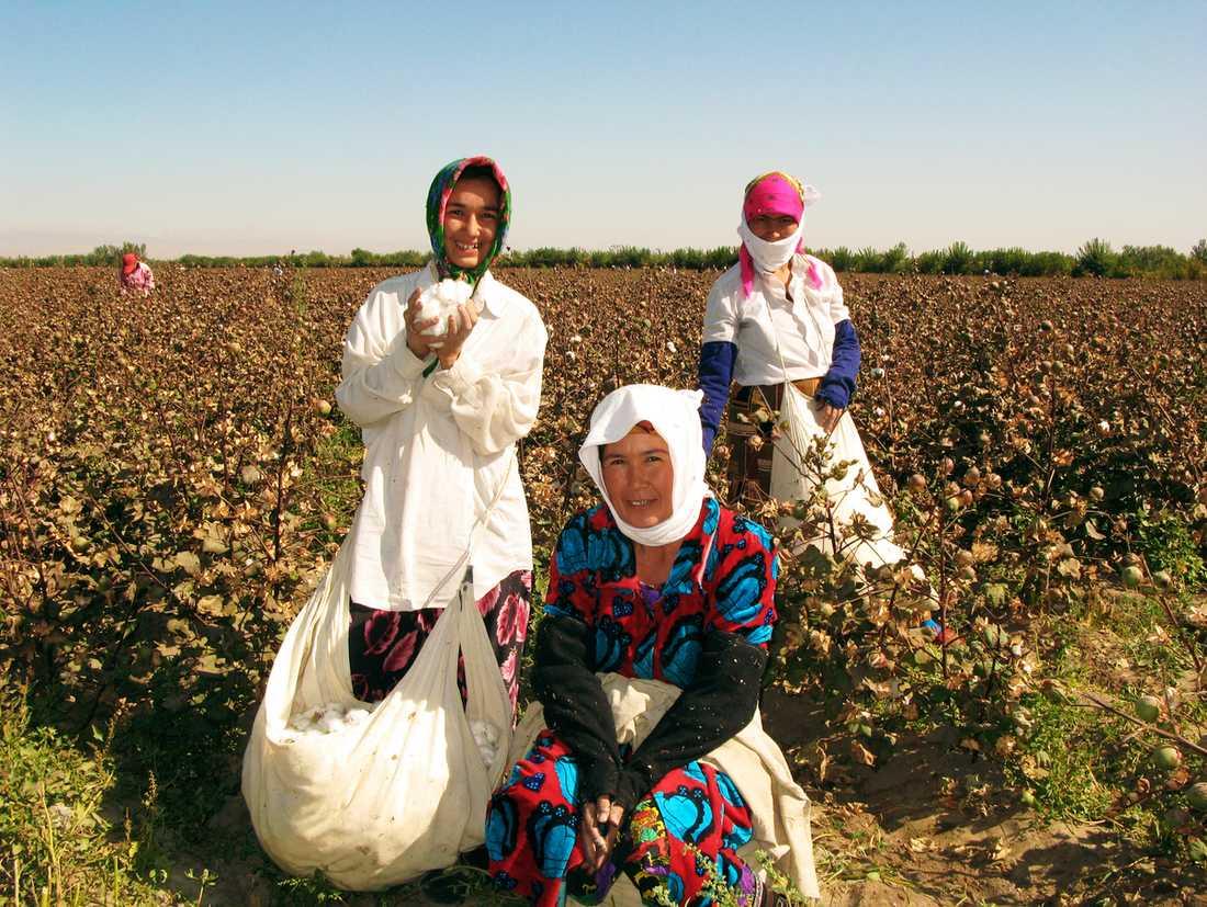 På vägen från Bukhara ner mot Turkmenistan stöter resenärerna på några bomullsplockerskor. Guld och bomull är Uzbekistans största exportvaror.