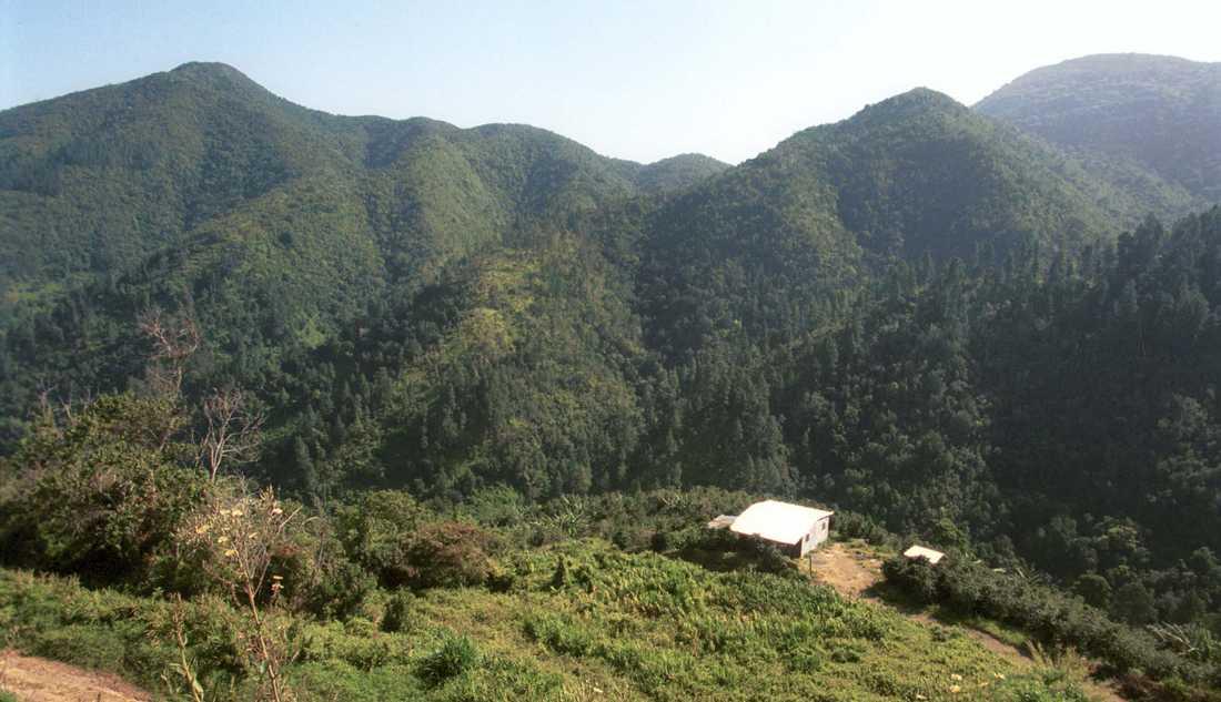 Jamaica fortsätter att öka i popularitet. Här är Blue Mountains, St. Peter, Jamaica som är med på Uneschos världsarvslista.