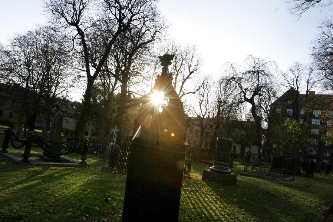 """""""Koltrastarna håller konsert i skymningen på Katarina kyrkogård och om coronan vill de nog inget veta"""", skriver Oisín Cantwell."""