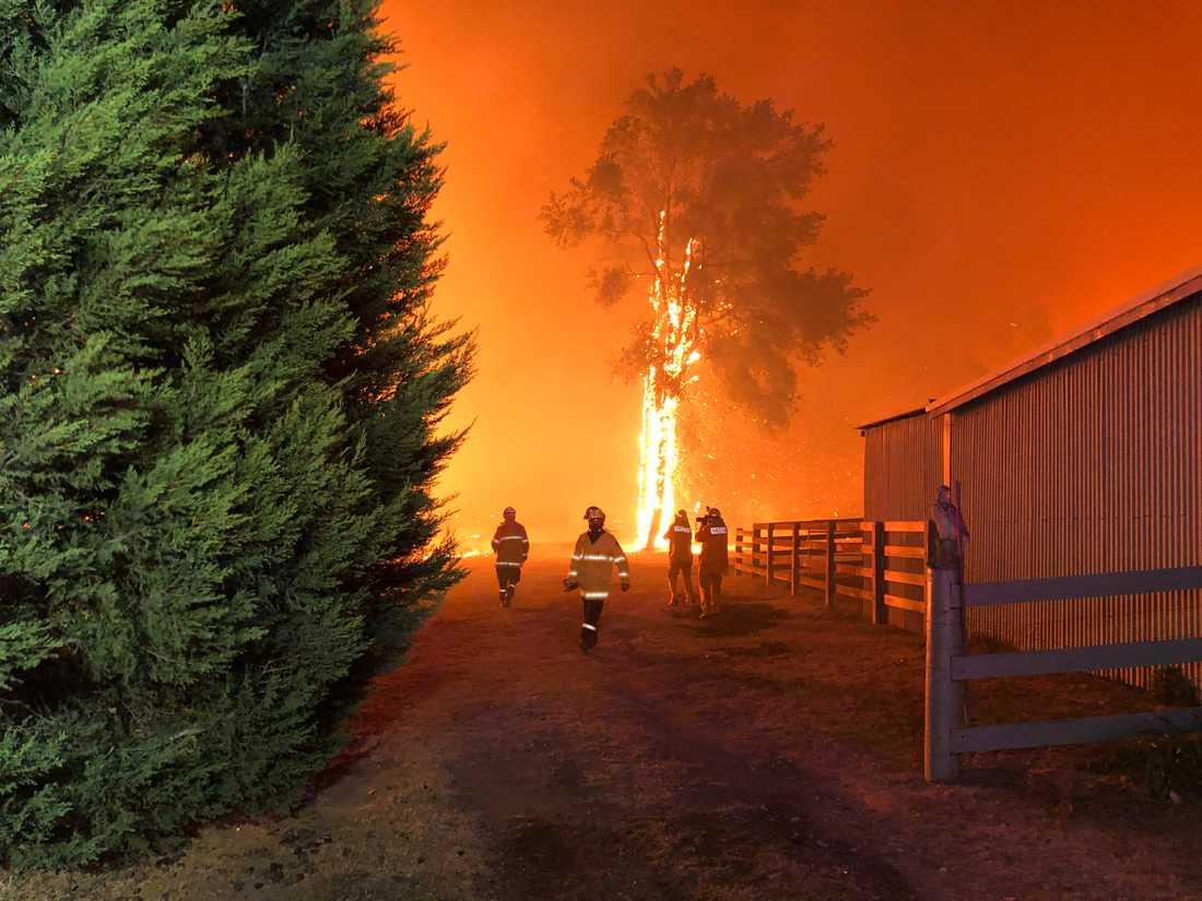 Terrängbränderna i delstaten New South Wales i Australien fortsätter med oförminskad kraft. Bilden kommer från Green Wattle Creek nära Oakdale.