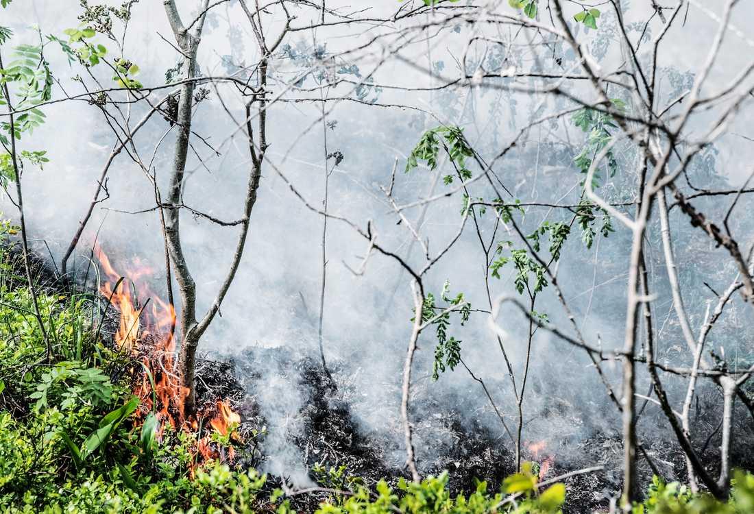 Nu har risken för skogsbrand ökat. Arkivbild.