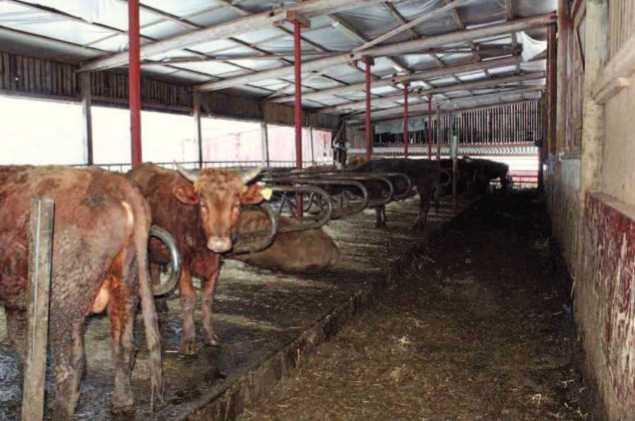 Lantbrukaren anmälde 69 kor som stulna.