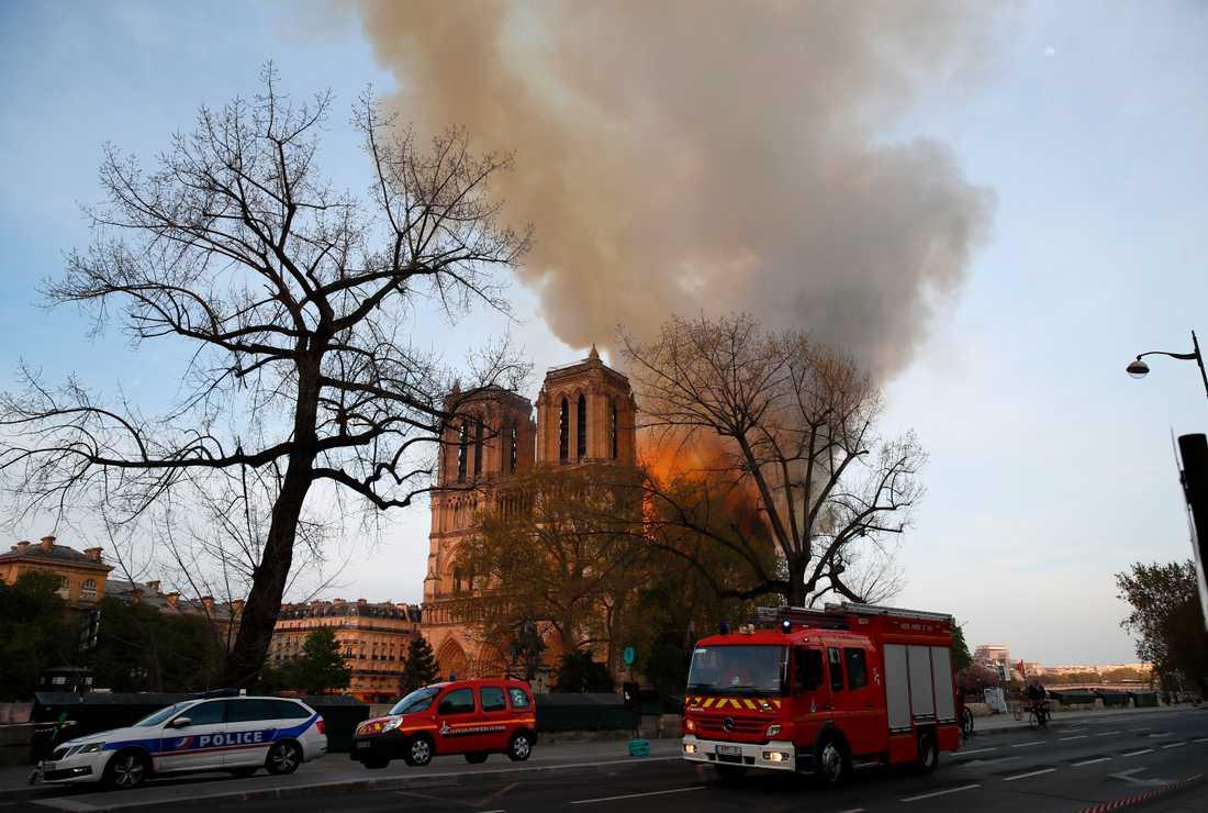 Notre-Dame i Paris ska återuppbyggas med bland annat tusen ekar. Arkivbild.