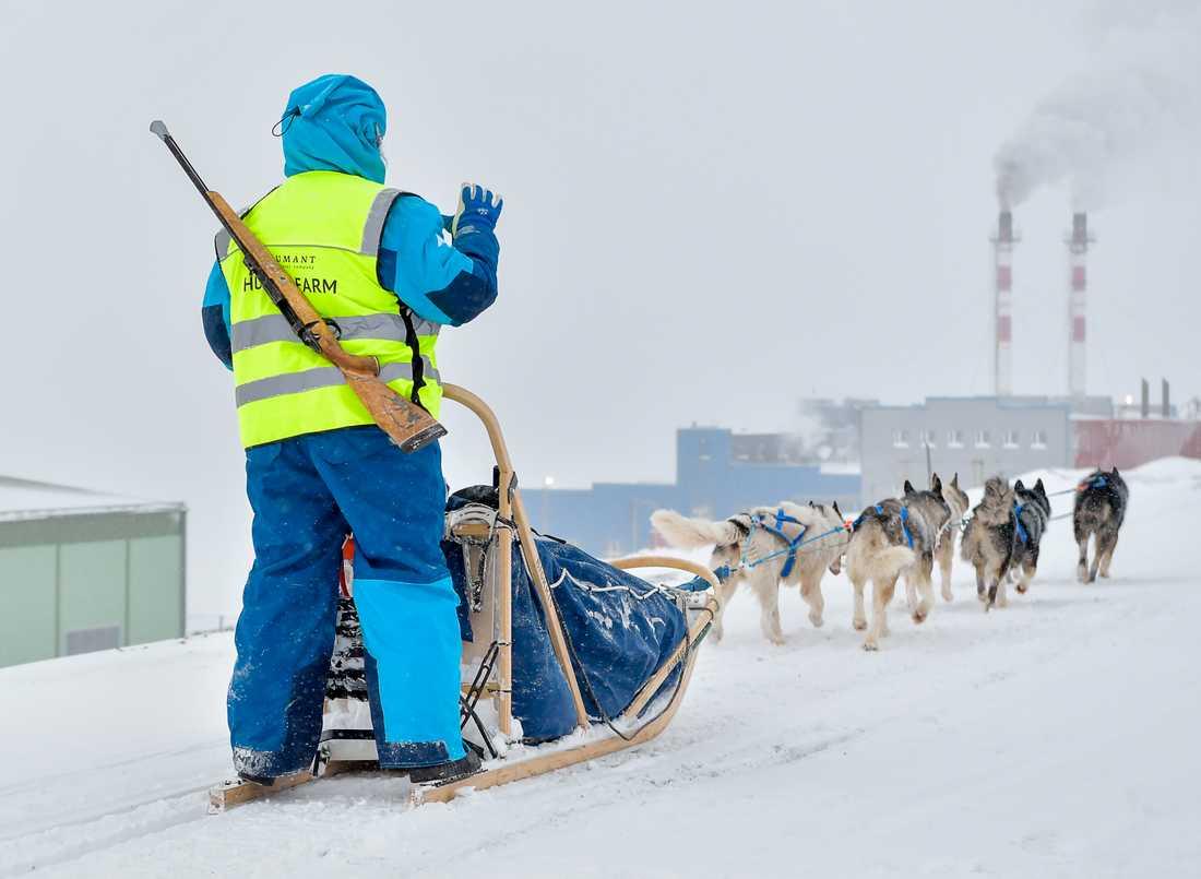 Det ryker från skorstenarna i Barentsburgs utkanter. Hundspann är bara en av många aktiviteter som erbjuds turister i det ryska gruvsamhället – i hopp om att locka fler besökare när koldriften blir allt mindre lönsam.