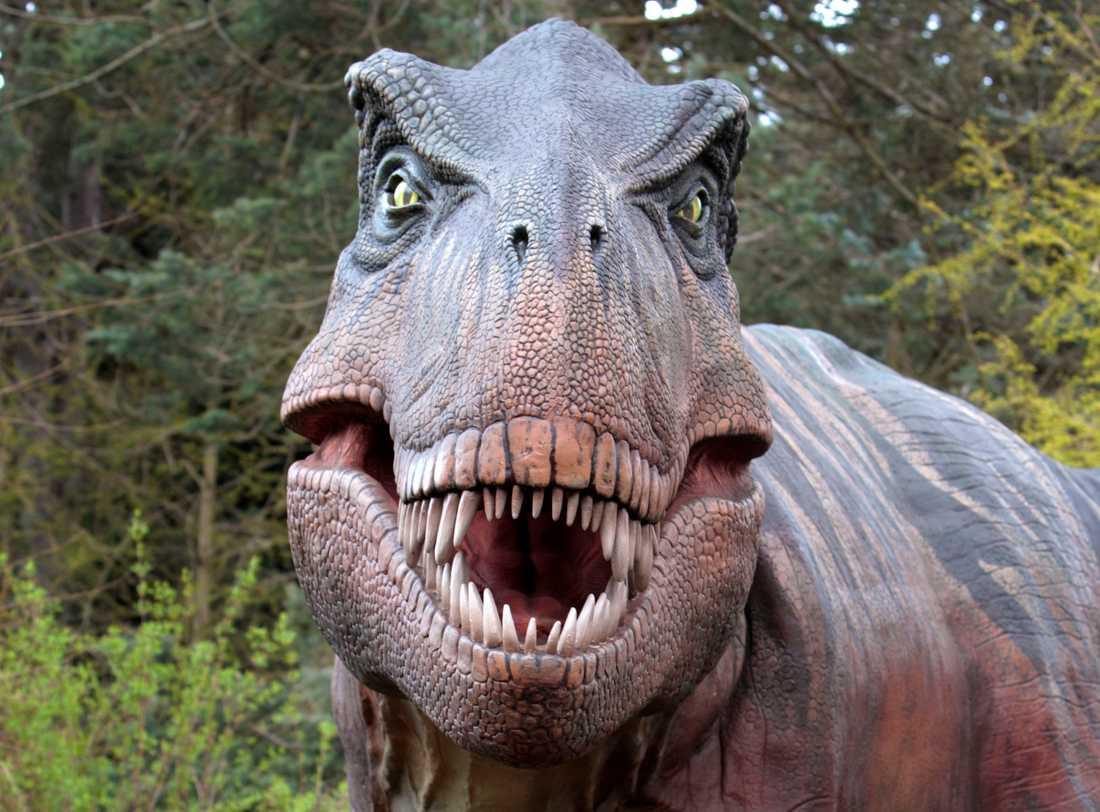 En annan T-rex. Arkivbild.