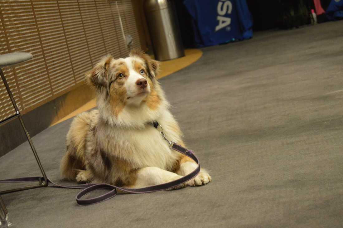 En tidigare nyårsfirare på Happy Dog.