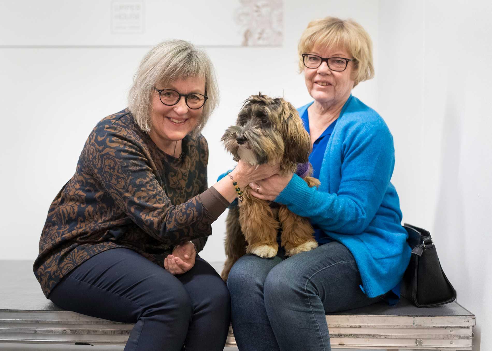 Massage för hundar blir allt mera populärt. Nilla, av rasen bichon havanais, är egentligen lite för ung, men ställer upp en kort stund som demonstrationshund med massören Margareta Pettersson. Till höger matte Kerstin Larsson.