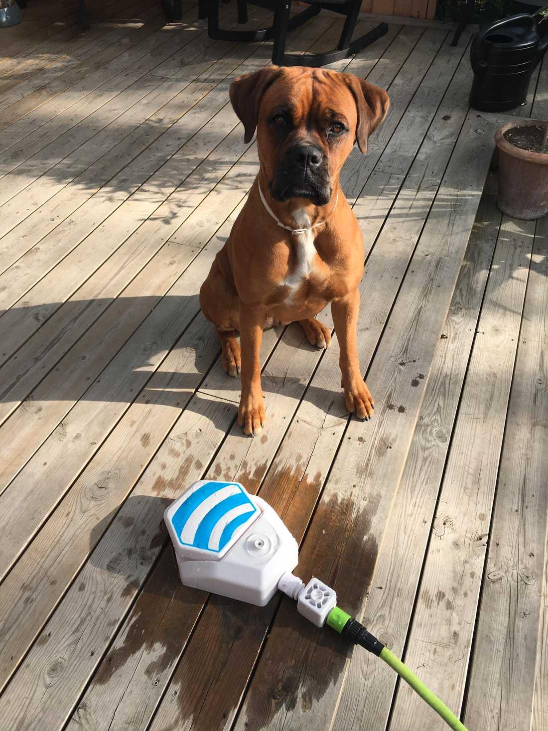 Nu får i alla fall Chaya leka med sin leksak som skickats från England.