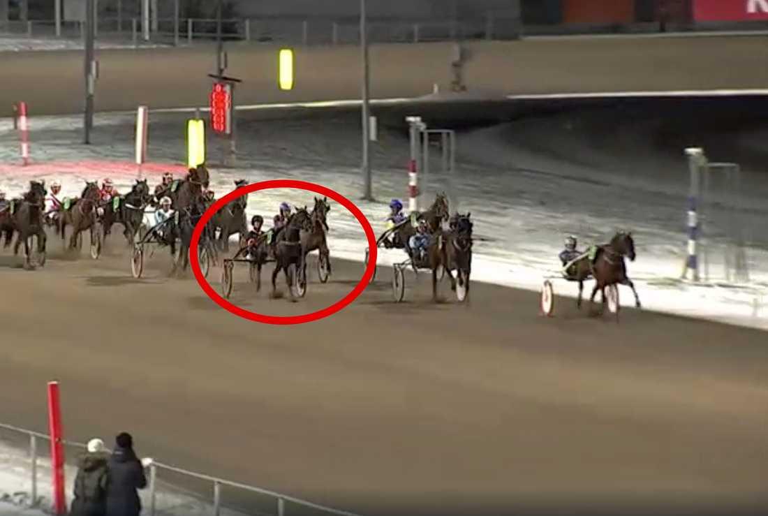 Falco di Quattro susade förbi samtliga hästar på upploppet.