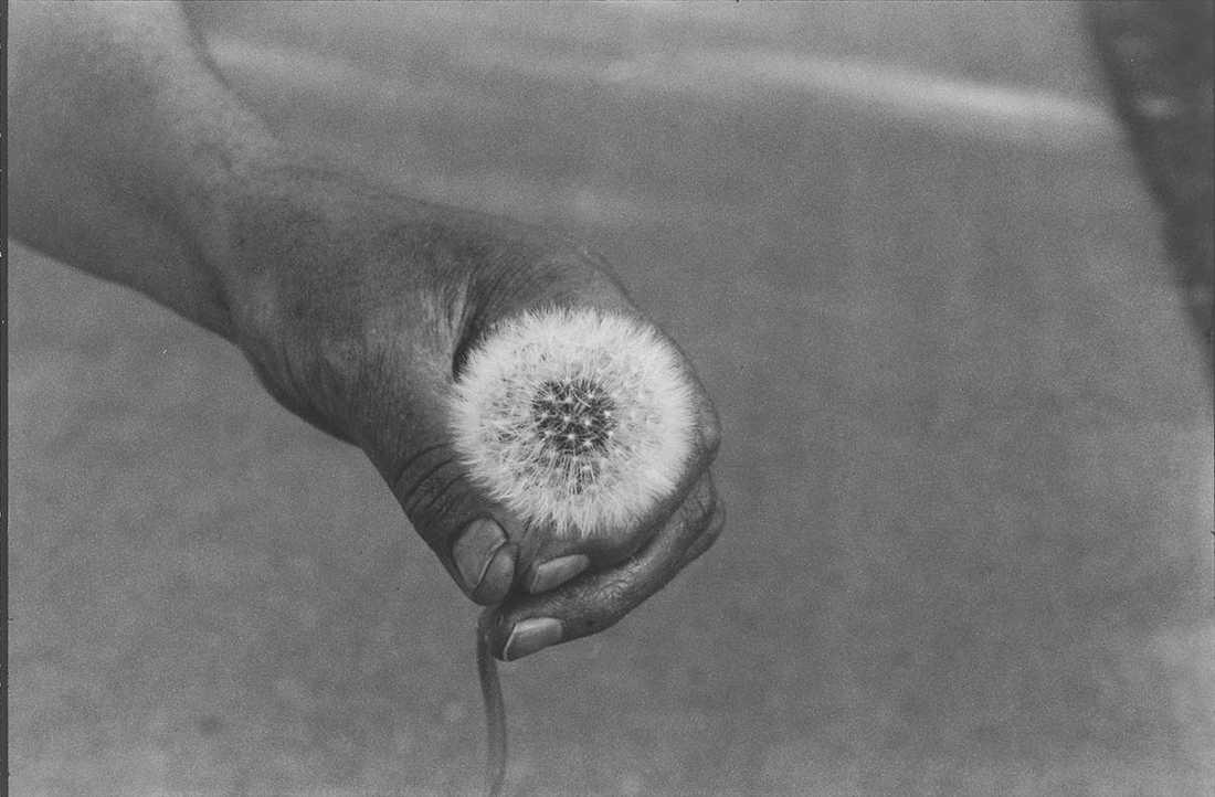 """""""The dandelion"""" av Cecilia Edefalk."""