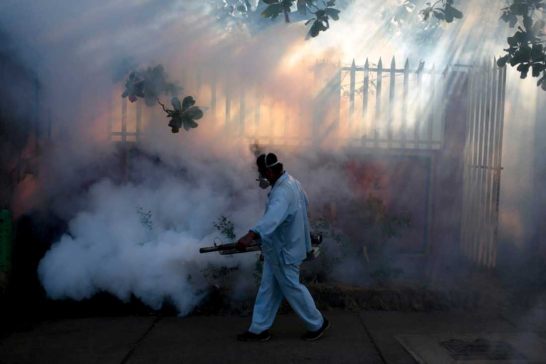 En medarbetare från hälsodepartementet sprutar myggmedel för att få bukt med insekterna.