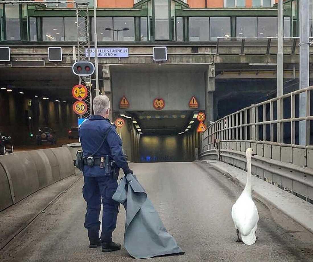 Svanen togs omhand av polisen.