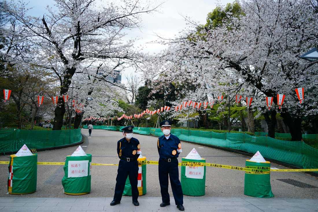 En gata med körsbärsträd – normalt fylld av strosande Tokyobor – har spärrats av i stadsdelen Ueno.
