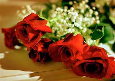 Ingen vet vem som skickade sju lastbilslass blommor.