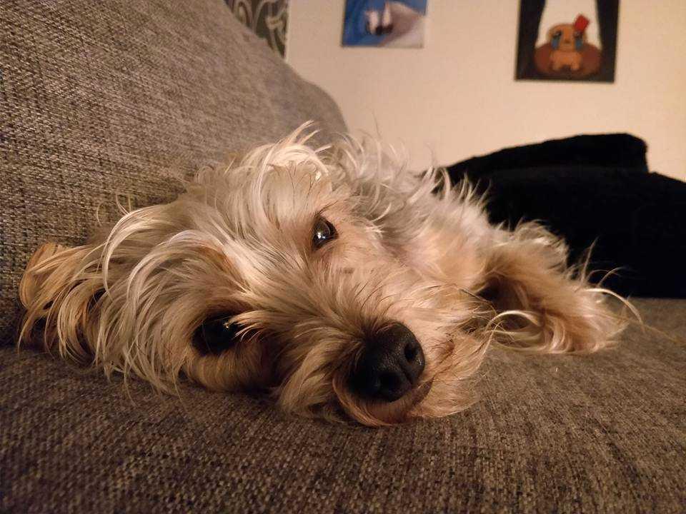 Finely är nyligen adopterad från Kanarieöarna.