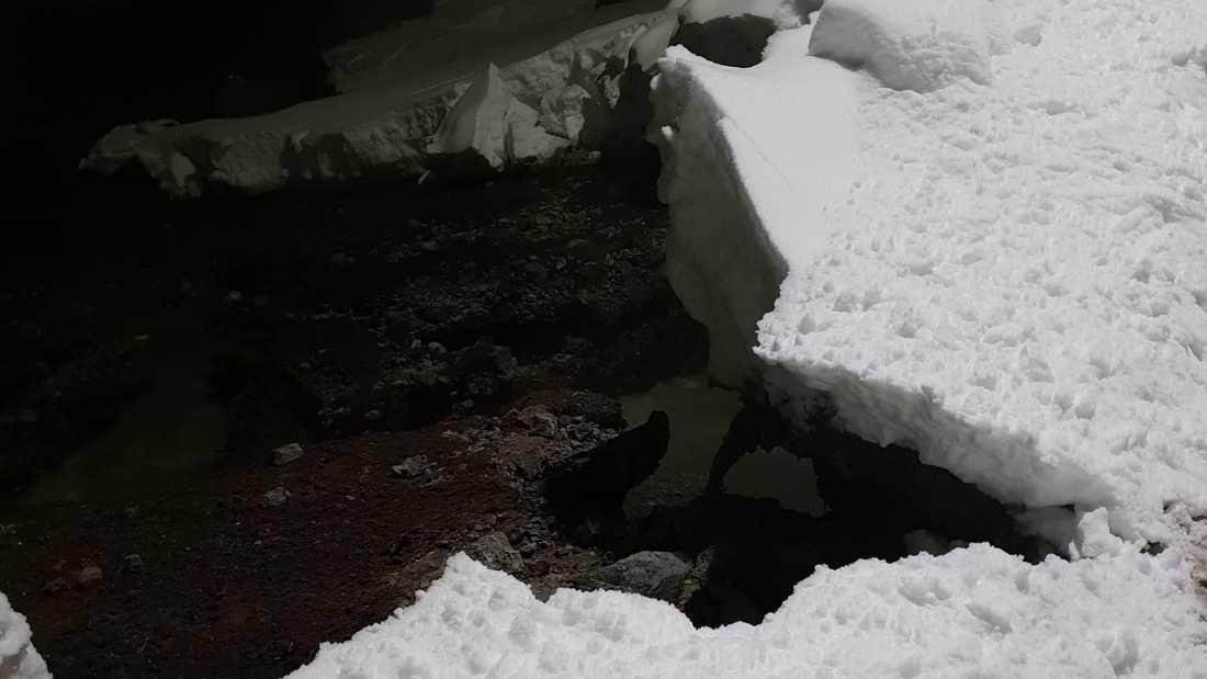 En stor vattenledning i Luleå har sprungit läck.
