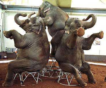 Välmående elefanter?