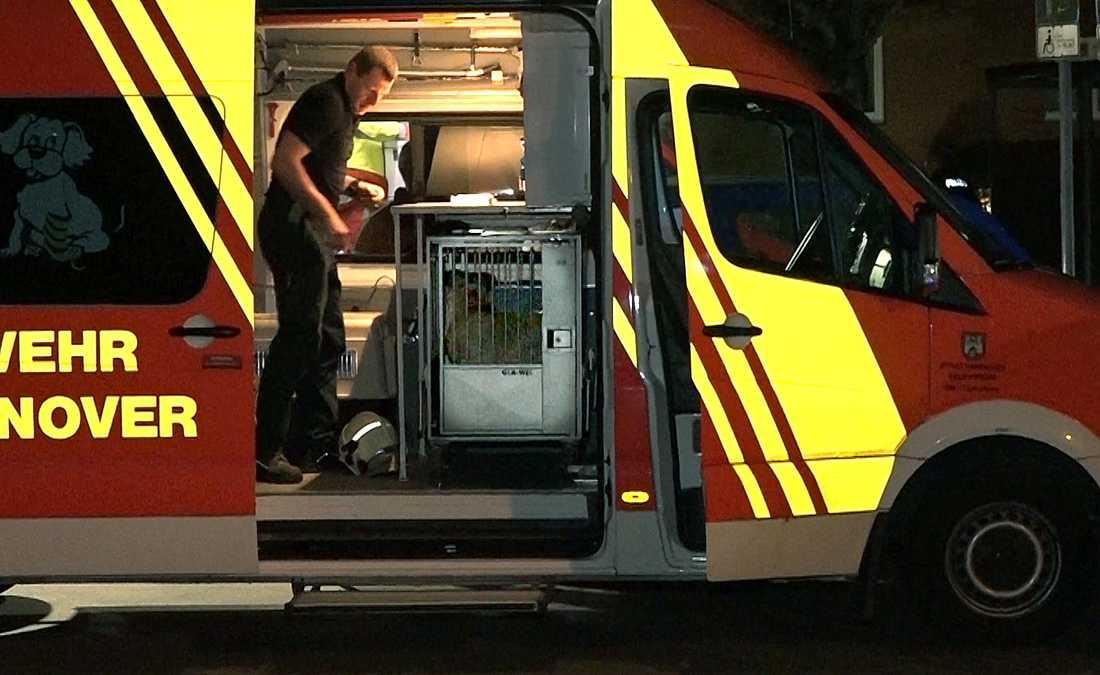 En kvinna och hennes son har hittats döda i Hannover, Tyskland. Allt tyder på att deras Staffordshire terrier dödat dem enligt polisen.
